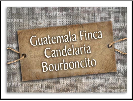 Guatemala Finca Candelaria Bourboncito
